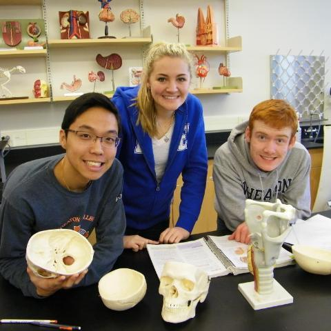 Students in lab looking at skulls