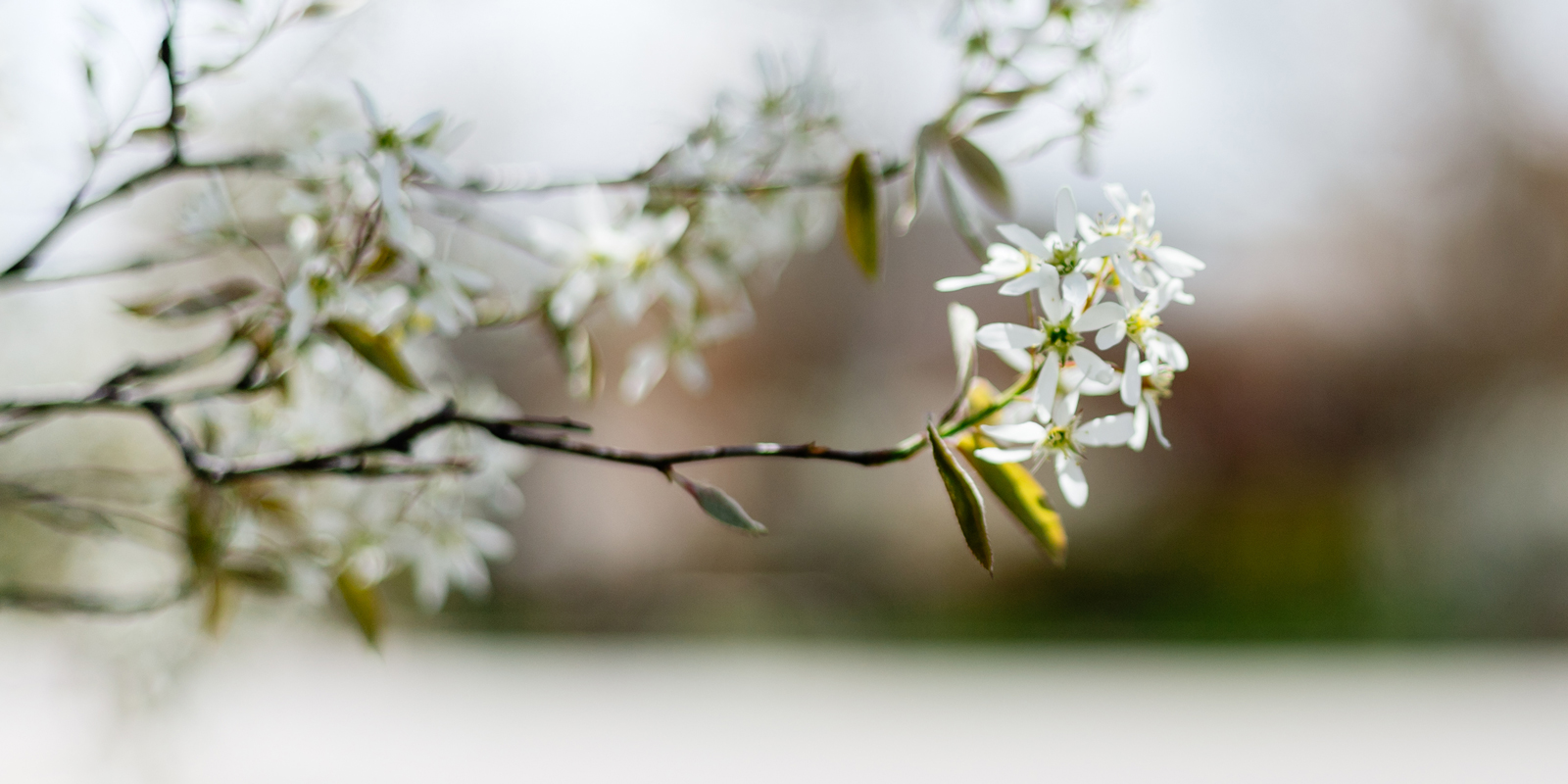 Surprised by Hope Blog Cover Photo, Flowers on Campus