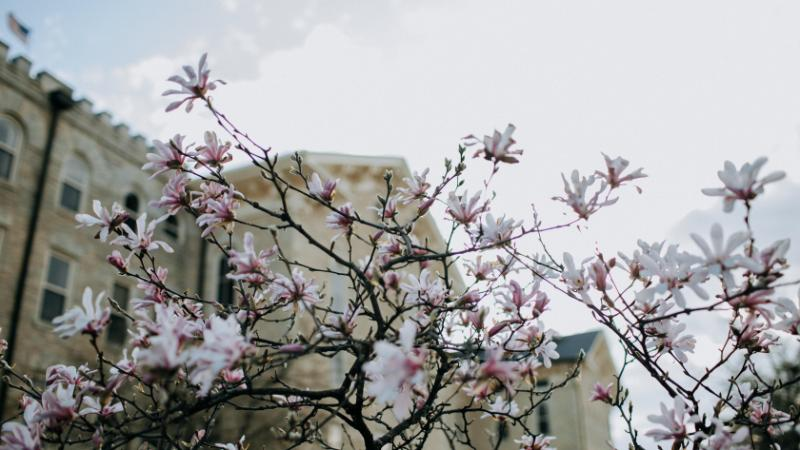 Campus flower tree