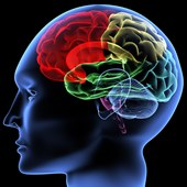 Neuro Cog Lab